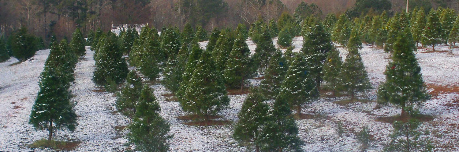 Christmas Tree Farms In North Georgia